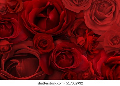Rose Background and texture photography
