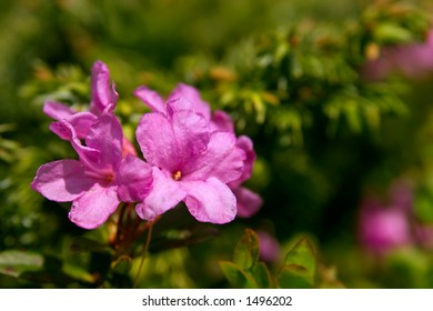 Rose bay (Rhododendron) macro landscape