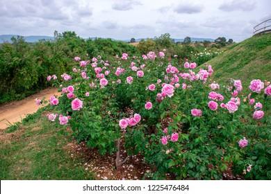 Rose bishops castle, rose garden