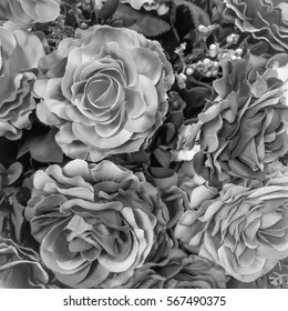 Rose black and white color