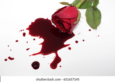 rose and blood splashed on white background