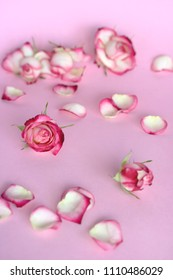 rose blooms and rose petals on pink background