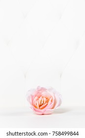 rose blossom in front of white leather background