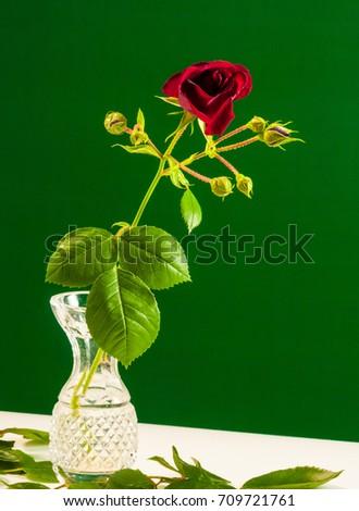 Rose Blossom On Long Stem Vase Stock Photo Edit Now 709721761