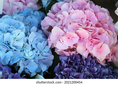 Rose and blue hydrangea. High quality photo. Selective focus - Shutterstock ID 2021200454