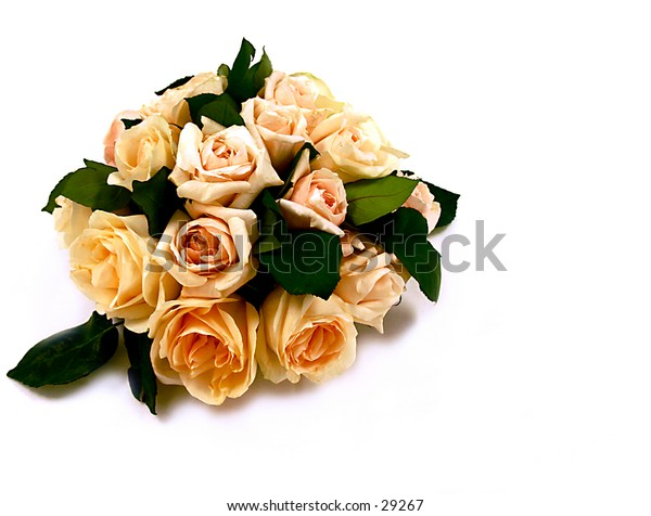 Rose Bouquet in Pastel Color on White Background
