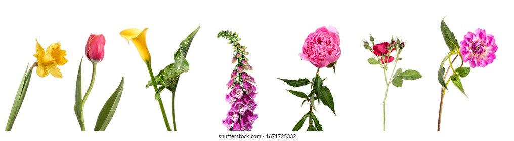 Rose, calla lilies, tulip, narcissus, dahlia, peony and  digitalis in set of flowers