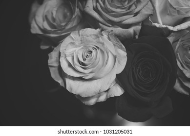 rose closeup in black and white