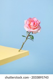 The rose falls against the pastel blue background at the edge of the table. Valentine'sDay - holiday
