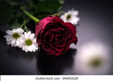 Rose, florists' daisy, close-up, macro.