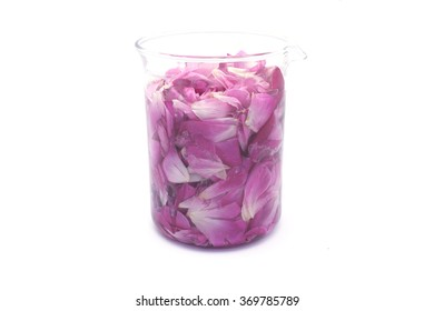 Rose Flower Extraction in Beaker