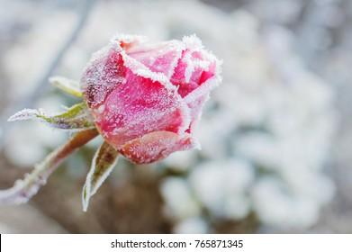 Imágenes Fotos De Stock Y Vectores Sobre White Flower Snow