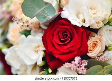 Rose flower isolated on floral background.