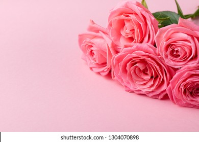 Rose flower on pink background. Copy space.