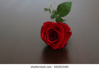 Rose flower on the wooden table
