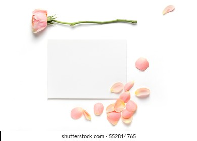 Rose flower and petals on empty piece of paper isolated on white. Copy space for text. Feminine concept. Mock up top view