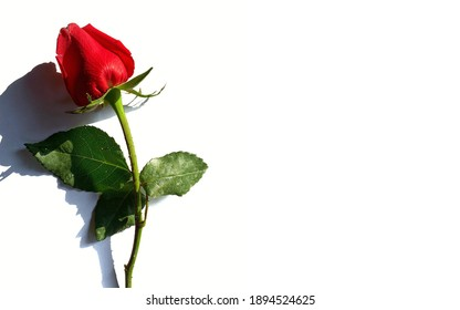 Rose, a flower that represents love, care, and bond. Good communication