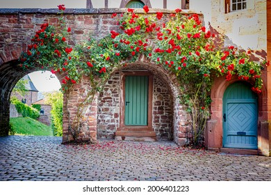 Rose flowers. Big rose bush on vintage stone wall background. Large Beautiful climbing rose tree near blue door of ancient medieval castle