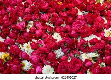 Rose Flowers, Dargah Hazrat Nizamuddin, Delhi, India