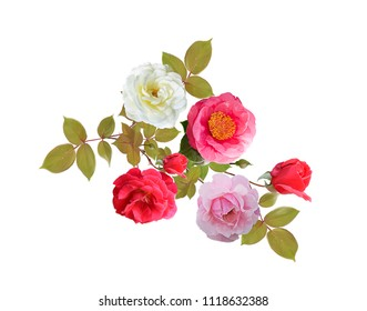 Rose flowers watercolor isolated on white background