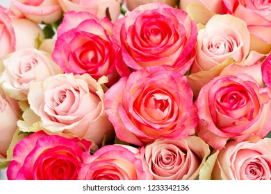Rose fresh flowers bouquet in two shades of pink close up background