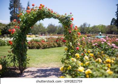 rose garden flower arch