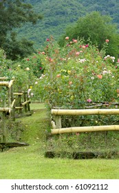 rose garden with lawn and mountain