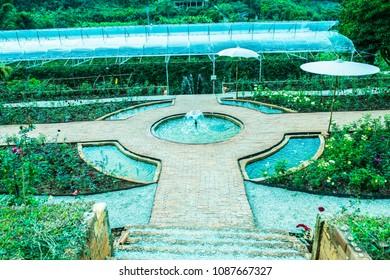 Rose garden on mountain, Thailand.