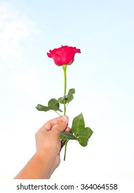 Rose gift for your love
