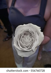 A rose for a girl in Valentine day