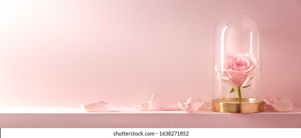Rose in a glass dome on pink background