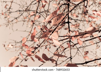 Rose gold colored leaves in autumn season