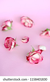 rose heads on pink background