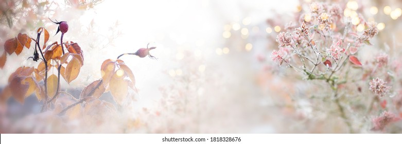 Rose hips and leaves in the autumn frost. Gray fog with tender golden bokeh. Natural landscape in autumn for a background. Close up with short depth of field and space for text.