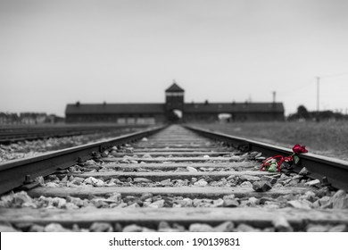 A rose laying down on the railroad track in memory of the victims of Auschwitz world war II