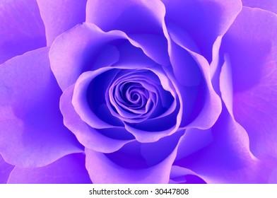 Rose macro/ background