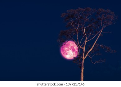 rose moon on night sky back over silhouette tree, Elements of this image furnished by NASA