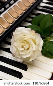 Rose on accordion keys.