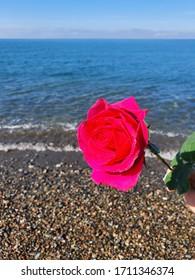 Rose on the background of the sea!  Juicy colors