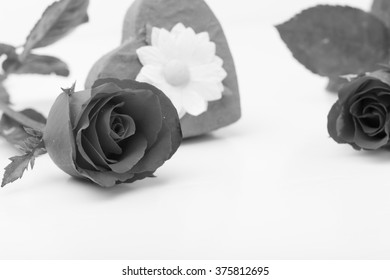 Rose on black and white background.