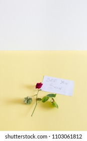 Rose on a colored background. copy space. Love concept.