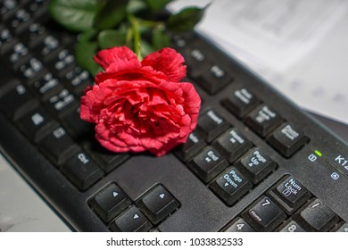 Rose on the keyboard in black background.