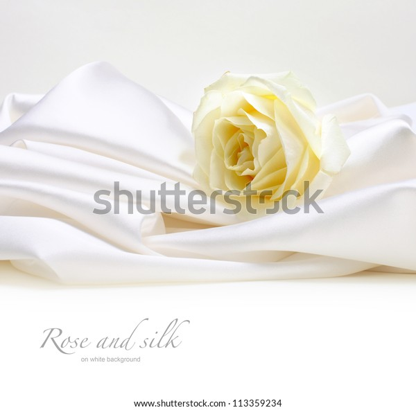 rose on white silk background