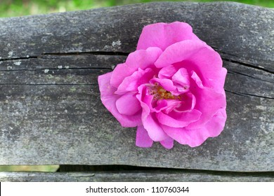 rose on wood