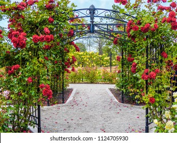 Rose passage in full bloom during summer time. Public park - Beacon Hill Park in Victoria, British Columbia, Canada