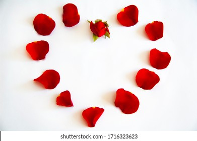 rose petals heart shape. cash rose. postcard. rose petals on a white background with a heart shape ..