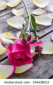 Rose and Rose petals lying down on a wooden table, close up