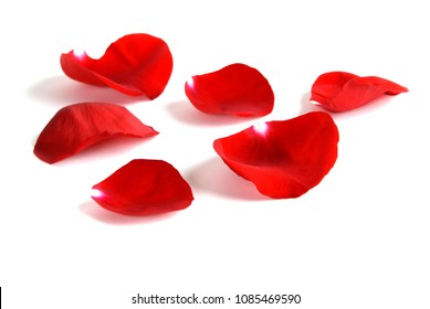 Rose petals on white background for love or romance