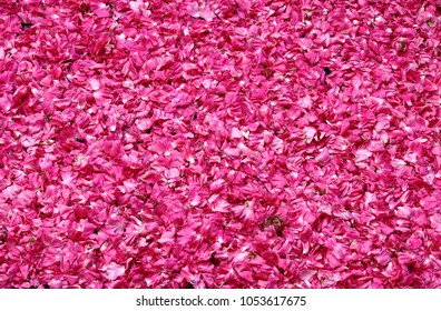 Rose petals for sale in a market stall