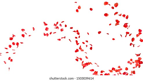 rose petals with white background
